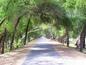 Lal Suhanra National Park, Bahawalpur, Punjab, Pak