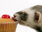 Ferret and cake wallpaper