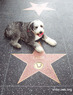 hollywoodwalkoffame.com