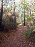 palmetto trail - awendaw passage francis marion nf