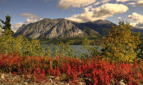 A Red Moment in the Yukon
