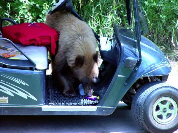 Bear wanting more!!