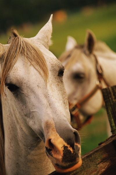 Снимки, които ни харесват HorsesForSale.com_4790f39ce4c14