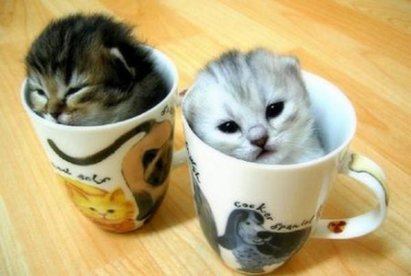 kittensforsalecom image gallery at weblo cats for sale 600x403