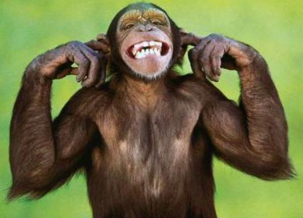 http://www.weblo.com/asset_images/large/MonkeysForSale.com_4798af1e1313a.jpg