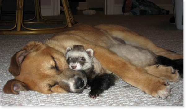 I love my ferret, too!!!